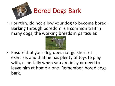 how to stop dog barking when left alone how to stop barking when left alone 28 images 9 tips