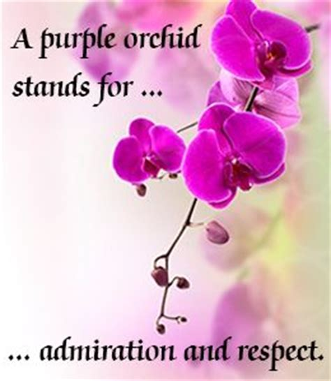 orchid color meaning 25 best ideas about purple orchids on vanda