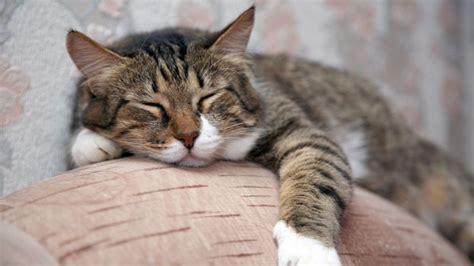 katzen zuhause allein zuhause wenn die katze ihr frauchen vermisst