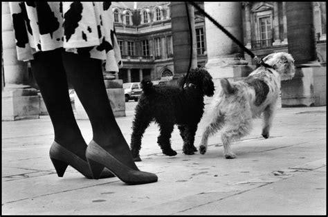libro elliott erwitts paris 15 fotograf 237 as vintage de perros en paris tomadas en el siglo pasado perro contento