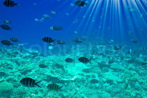 sea bed underwater landscape of red sea stock photo colourbox