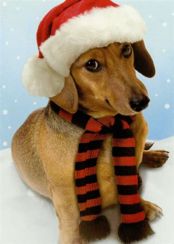 weinerful time dachshund dog christmas card  recycled paper
