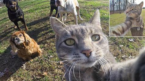 katze macht immer auf den teppich diese katze macht bessere selfies als du