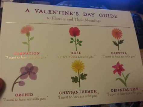 valentine s day flower meanings decoded