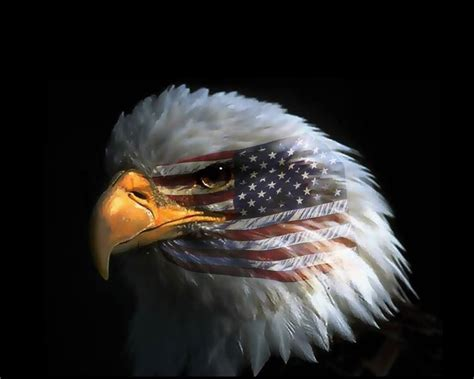 eagle eye american flag wallpaper hd  mobile phone