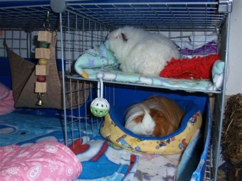 how to make a guinea pig bed pinterest discover and save creative ideas