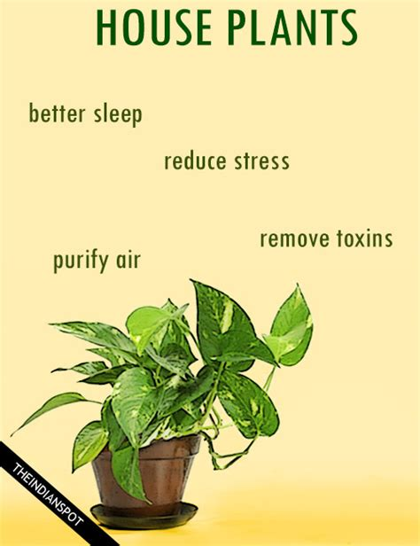 benefits of house plants amazing health benefits of house plants