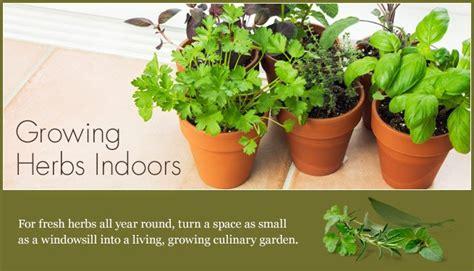 growing herbs indoors calphalon growing herbs indoors