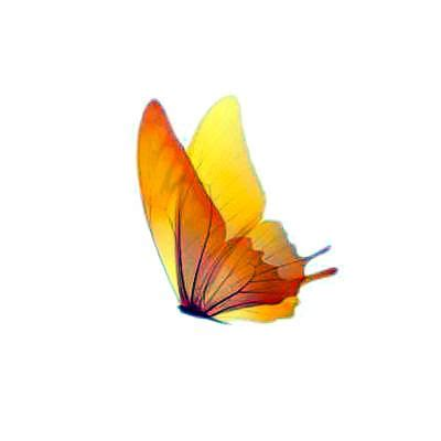 24 best yellow butterfly meaning images on best 20 yellow butterfly ideas on