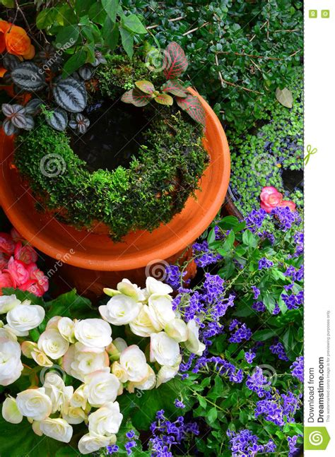 Small Trees To Plant Near House by Small Garden In Home With Small Plants Stock Photo