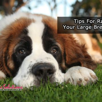 tips for raising a puppy why dogs need to chew