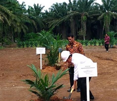 Bibit Jagung Nusantara presiden jokowi berdaulat penuh ri tak lagi impor jagung