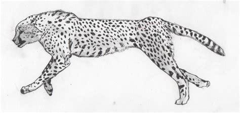 sketchbook cheetah image gallery speed sketch