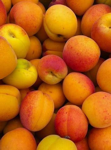 alimenti che contengono vitamina a albicocche tra gli alimenti con vitamina a i 5 alimenti
