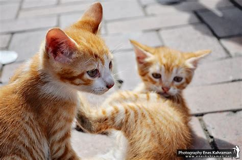 twin cats twin cats by khrmnens on deviantart