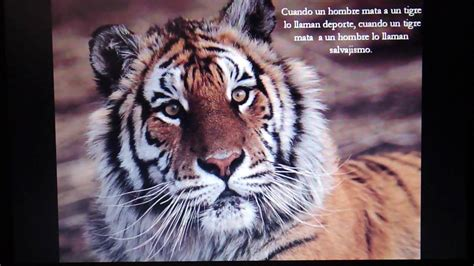 imagenes para reflexionar de animales reflexion quot el reino animal quot hermoso youtube