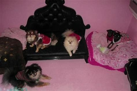 paris hilton dogs house luxury at a new level abode