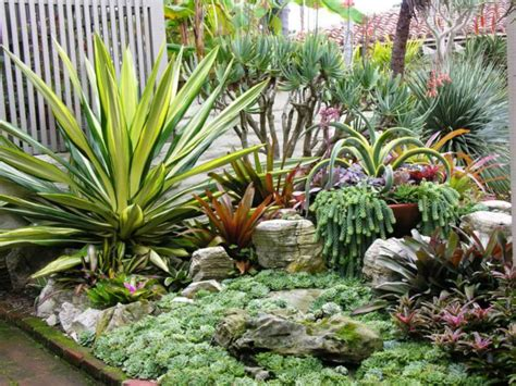 how to grow a succulent garden world of succulents