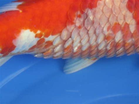 Fishcare Ems Energiemangelsyndrom