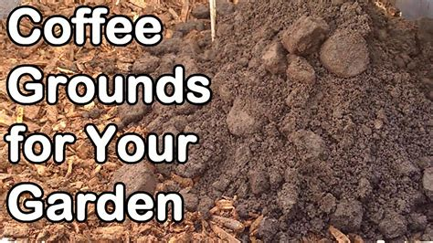 Coffee Grounds For Gardening by Coffee Grounds How And Why We Use Them In Our Garden