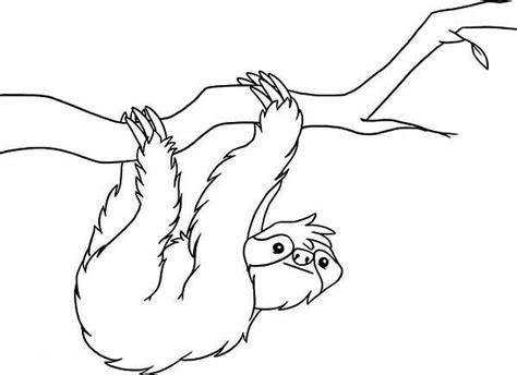 sloth coloring page for kids color luna
