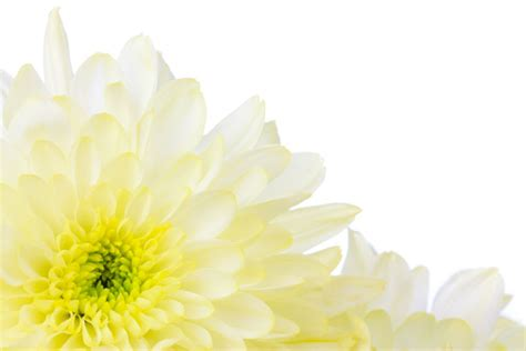 border design flower yellow yellow flower border free stock photo public domain pictures
