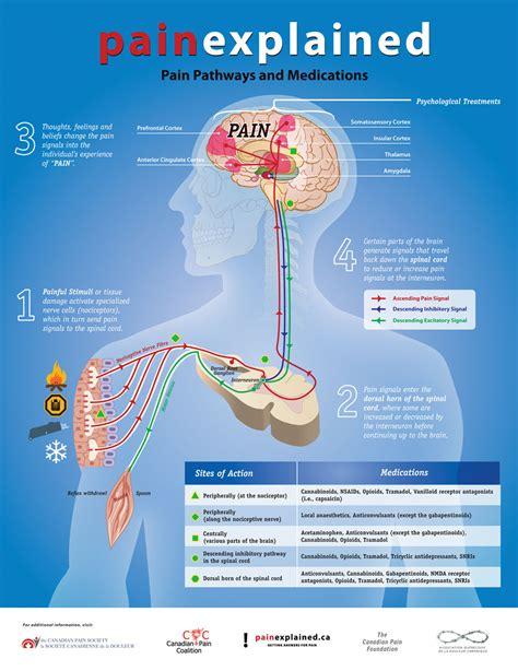 diagram explained explained optimyz magazine your health fitness