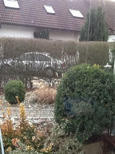 Garten Katzensicher by Garten Katzensicher Machen Katzen Forum