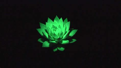 glow in the dark plants glowing star in the dark 174 youtube
