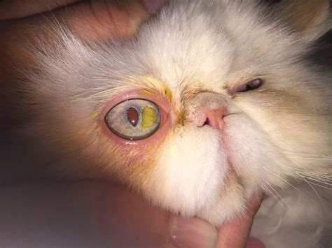Рак глаза симптомы фото у детей