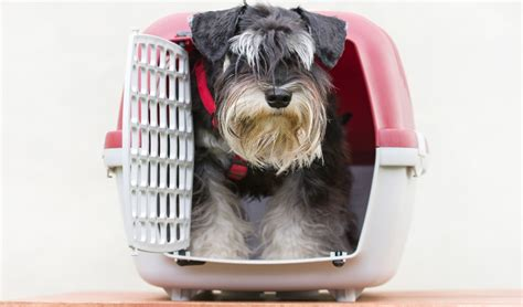top   small dog crate  small dogs  puppies