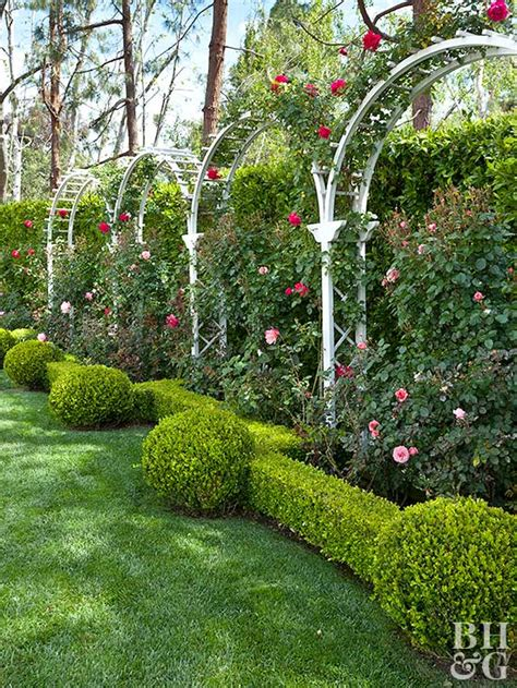 how to create a rose trellis arch how tos diy arch trellis ideas