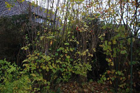 Garten Busch by Ein Busch Im Garten In Kohlscheid Bank Am Abend Vom 20 11 2013 Landschaftsfotos Eu
