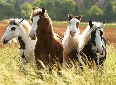 caballo cogida brutal por detras so 241 ar con caballos 191 c 243 mo interpretarlo