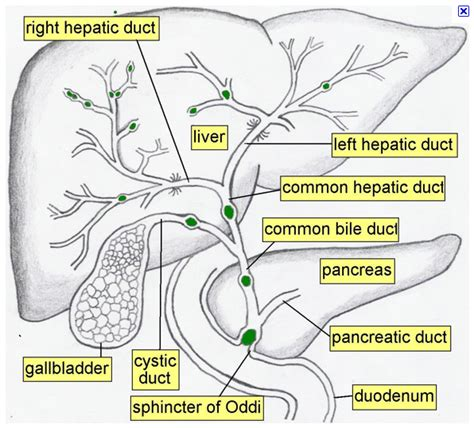 Hypernasal Speech Sle palatopharyngeal sphincter