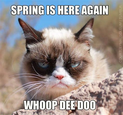 Original Grumpy Cat Meme - 40 best my contributions to the meme pool images on