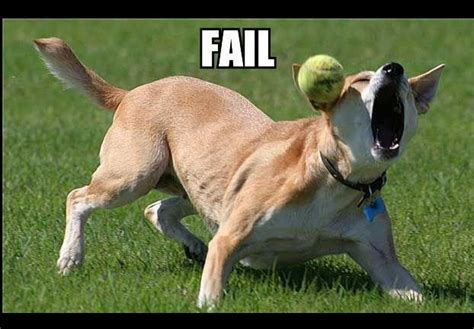 puppy fails are you setting your up to fail thedogtrainingsecret