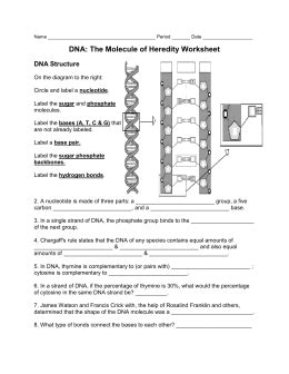 section 10 1 review discovery of dna answers 8 3 dna replication