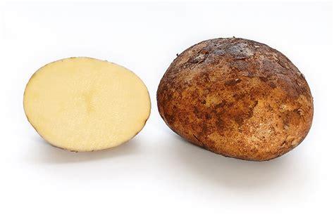 Potato Synonym by Solanum Tuberosum Potato