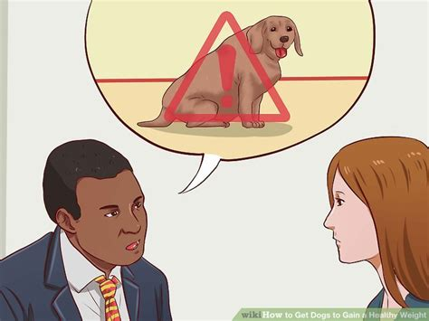 how to get a puppy to gain weight expert advice on how to get dogs to gain a healthy weight
