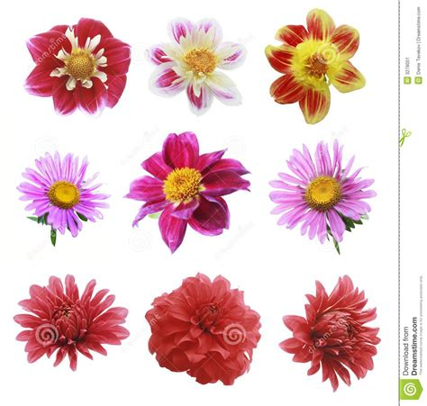image for flowers nine flowers stock image image 3278051