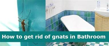 How To Get Rid Of Gnats In Kitchen And Bathroom image gallery shower gnats