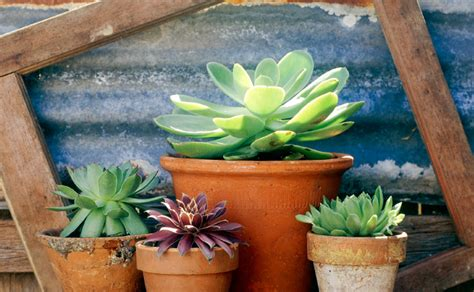 Best Planter Flowers by Best Pot Plants For Sun And Shade Burke S Backyard