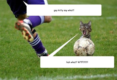 Soccer Gay Meme - gay kitty say what huh what wtf fifa kitty