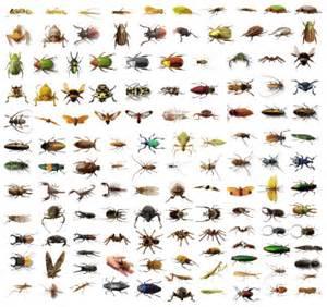 house pest brisbane pest control blog household pests part 1
