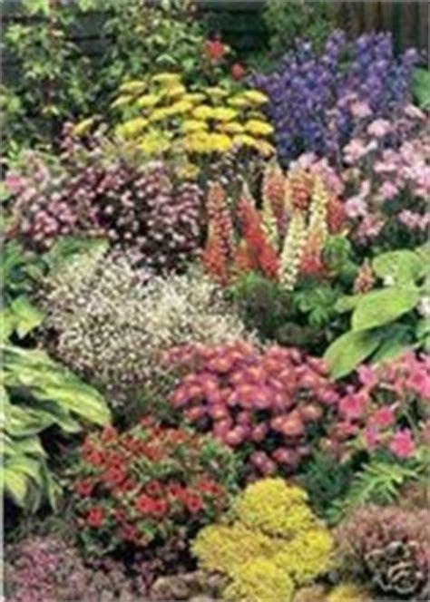 garden border perennials collection gsd  seed