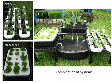 aquaponics diy systems