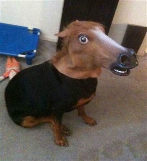 dogs that look like horses top 10 equestrian dogs that look like horses paperblog