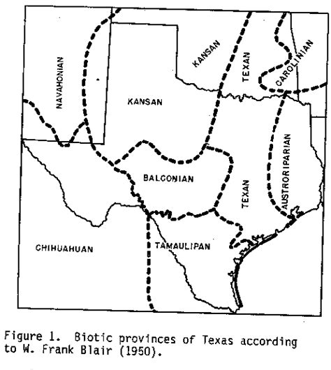 fault lines in texas map balcones escarpment
