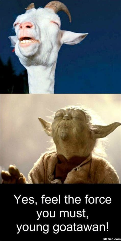 Meme Pictures Funny - meme meditation level goatawan